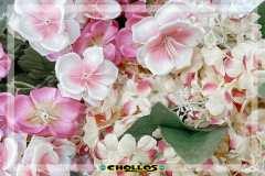 image00011